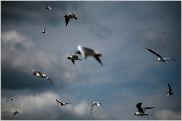 linnud188